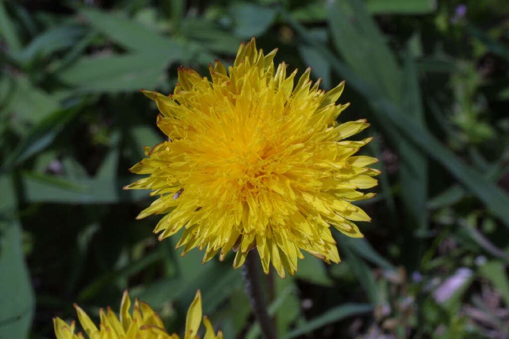 Image of Rantavoikukat