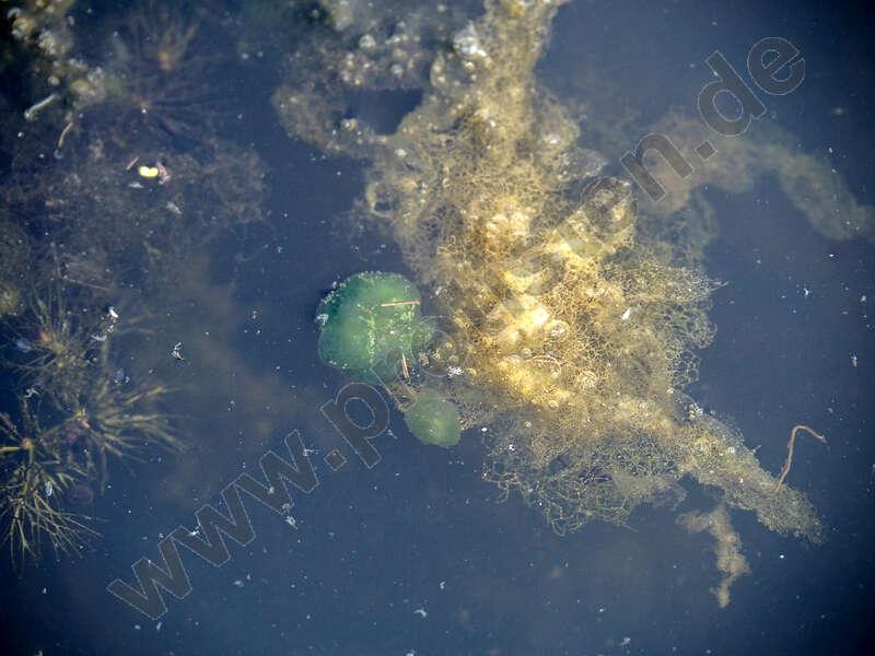 Image of Cyanobacteria/Melainabacteria group