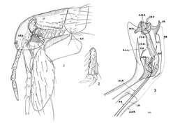 Image of fleas