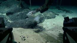 Image of sponges