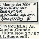 Image of <i>Abanycha fasciata</i> Galileo & Martins 2005
