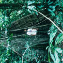Image of <i>Swintonia floribunda</i> Griff.