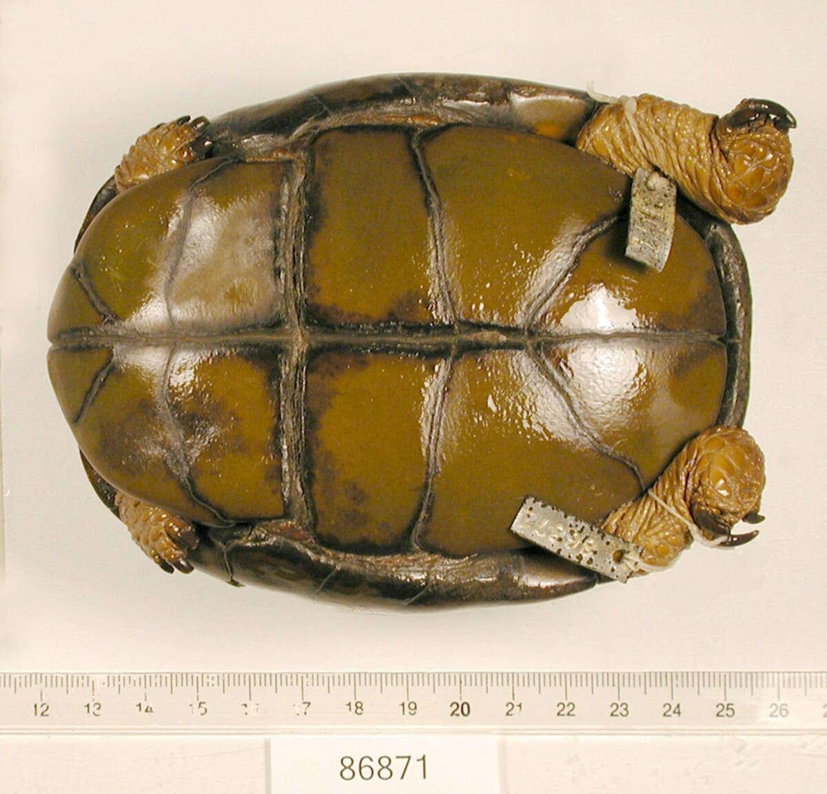 Image of turtles