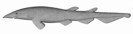 Image of modern sharks