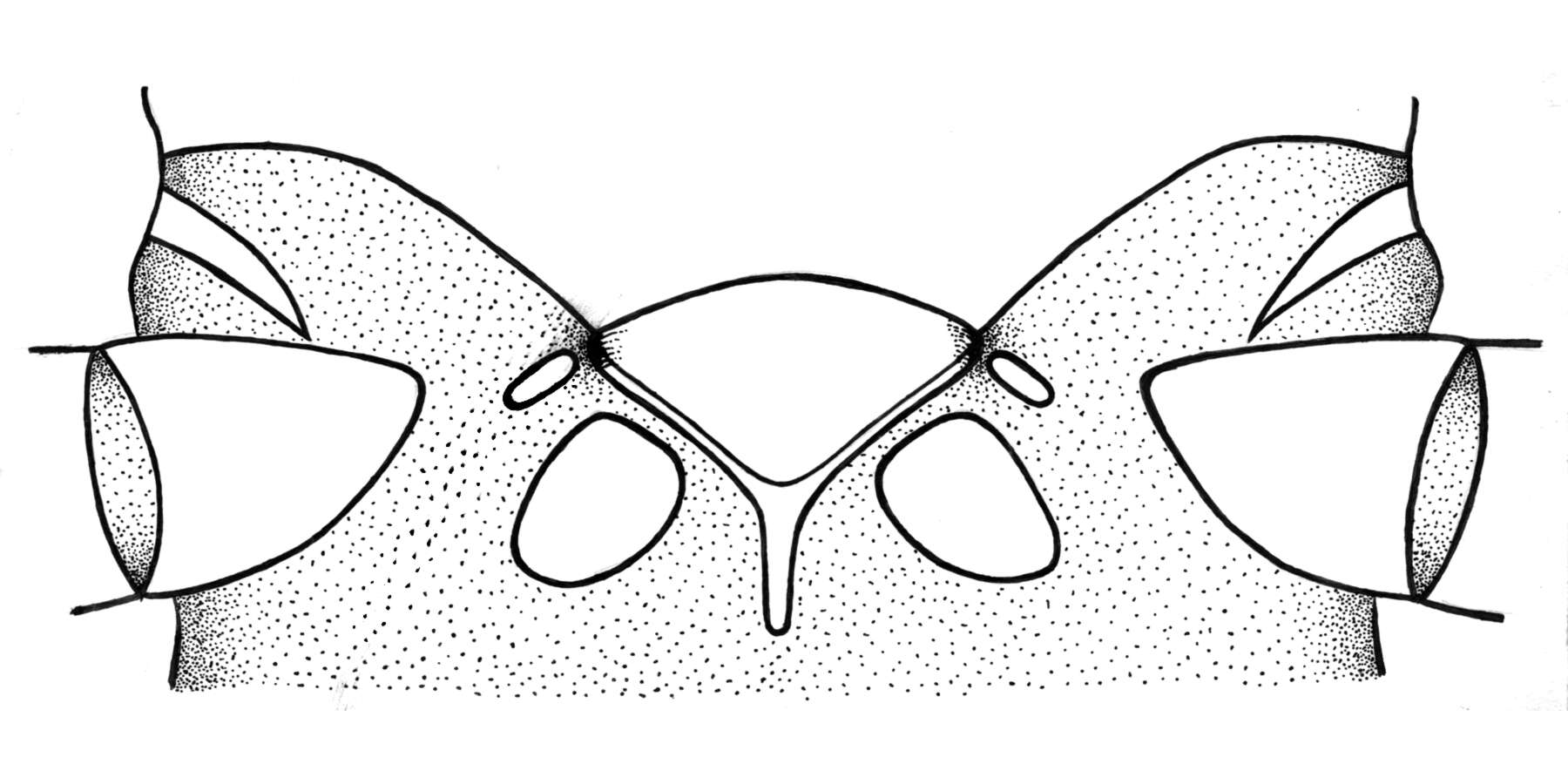 Image of Polyneoptera