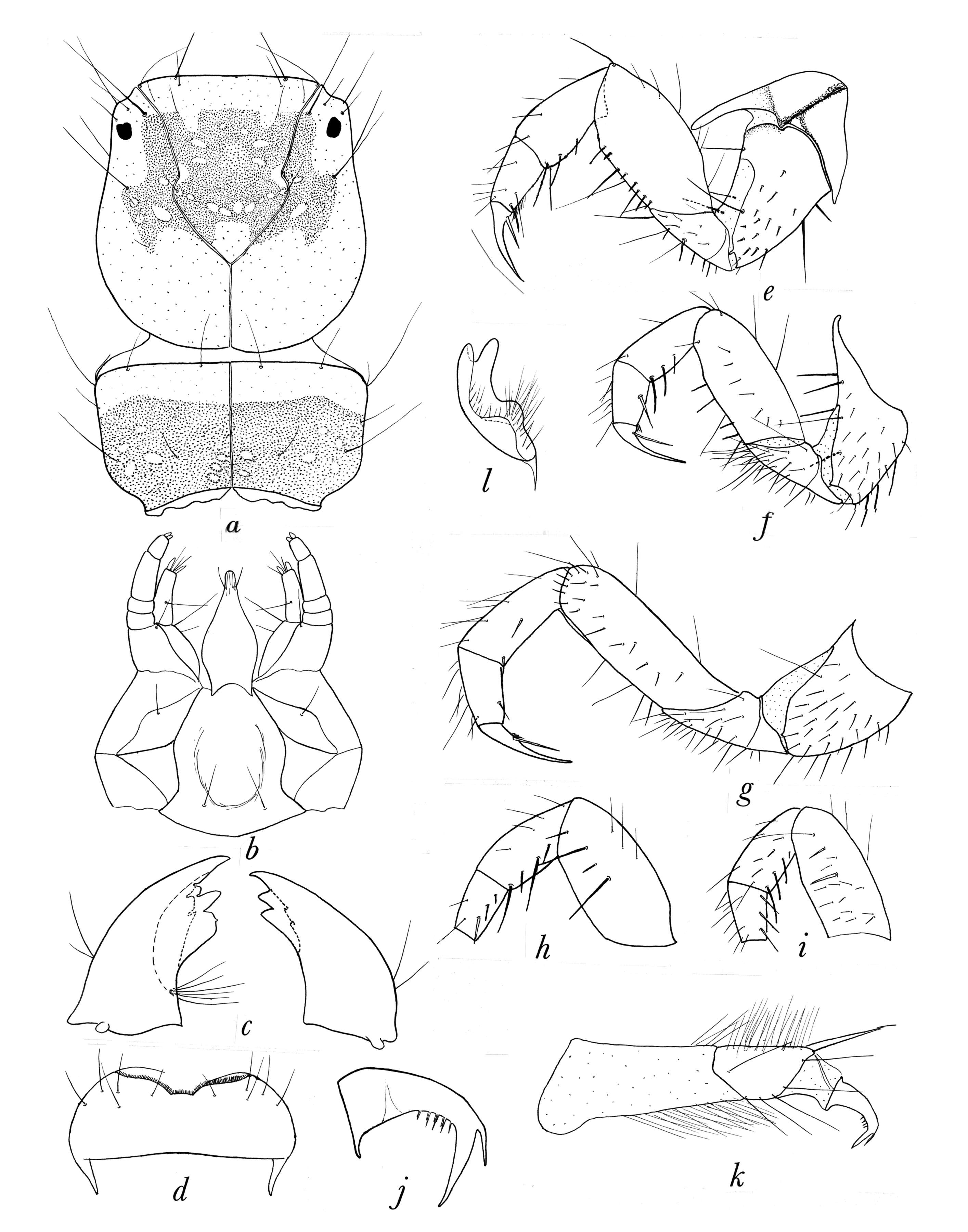 Image of Hydropsychoidea