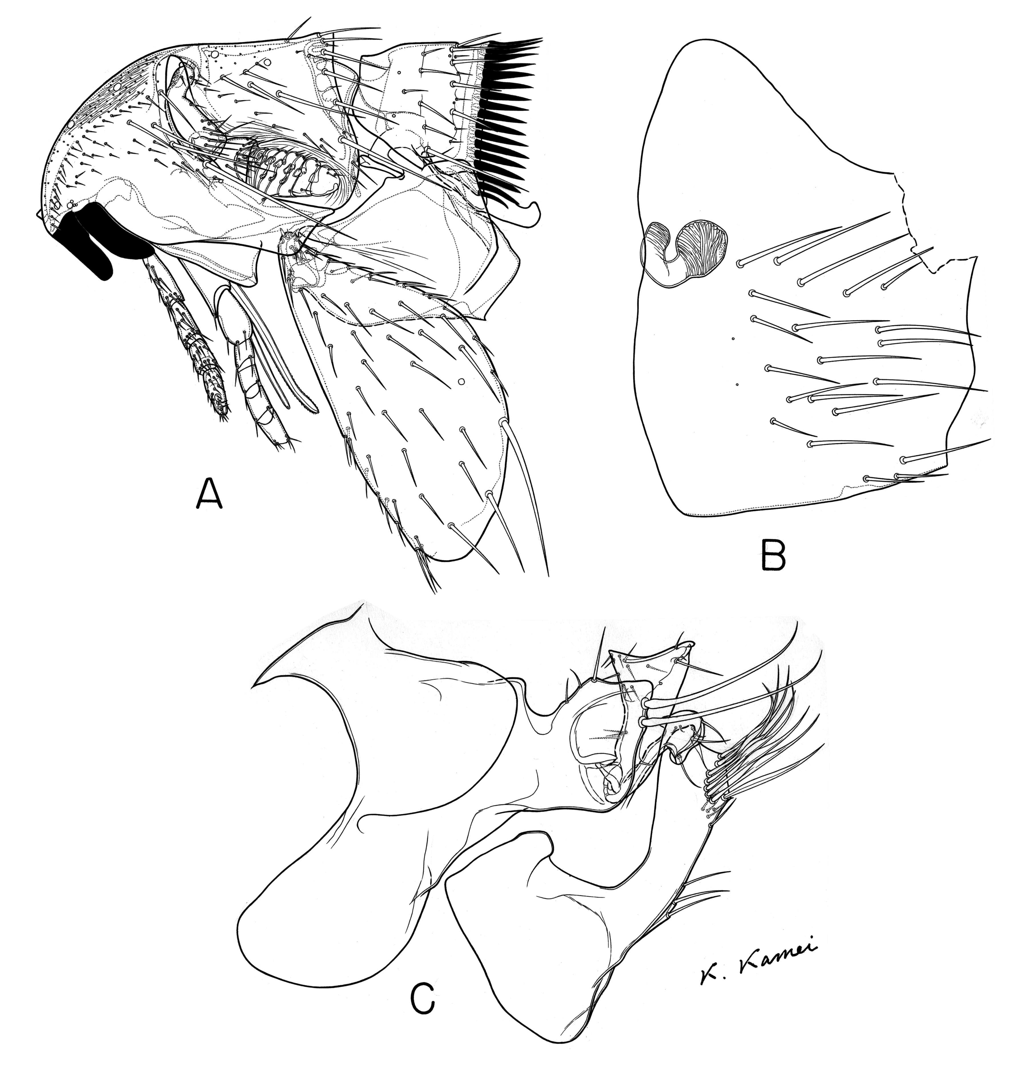Image of Ceratophylloidea