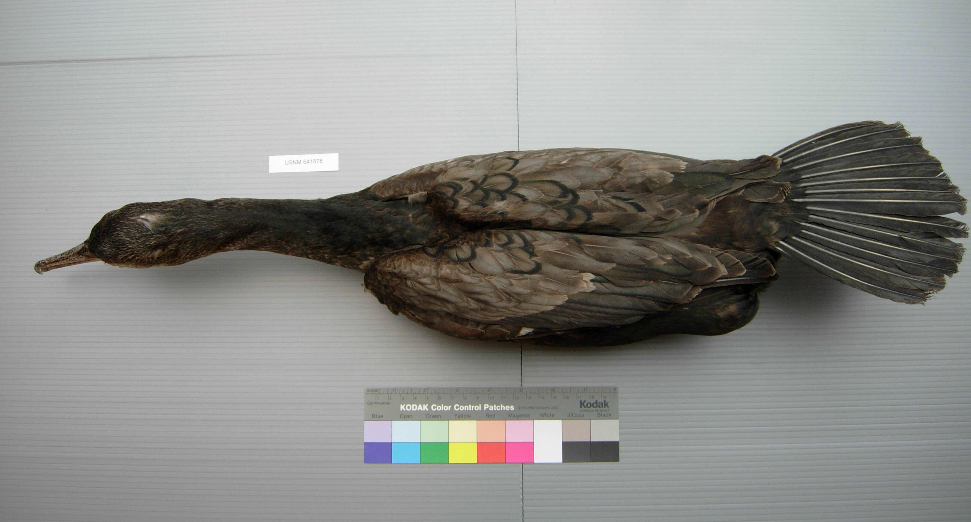 Image of waterbirds
