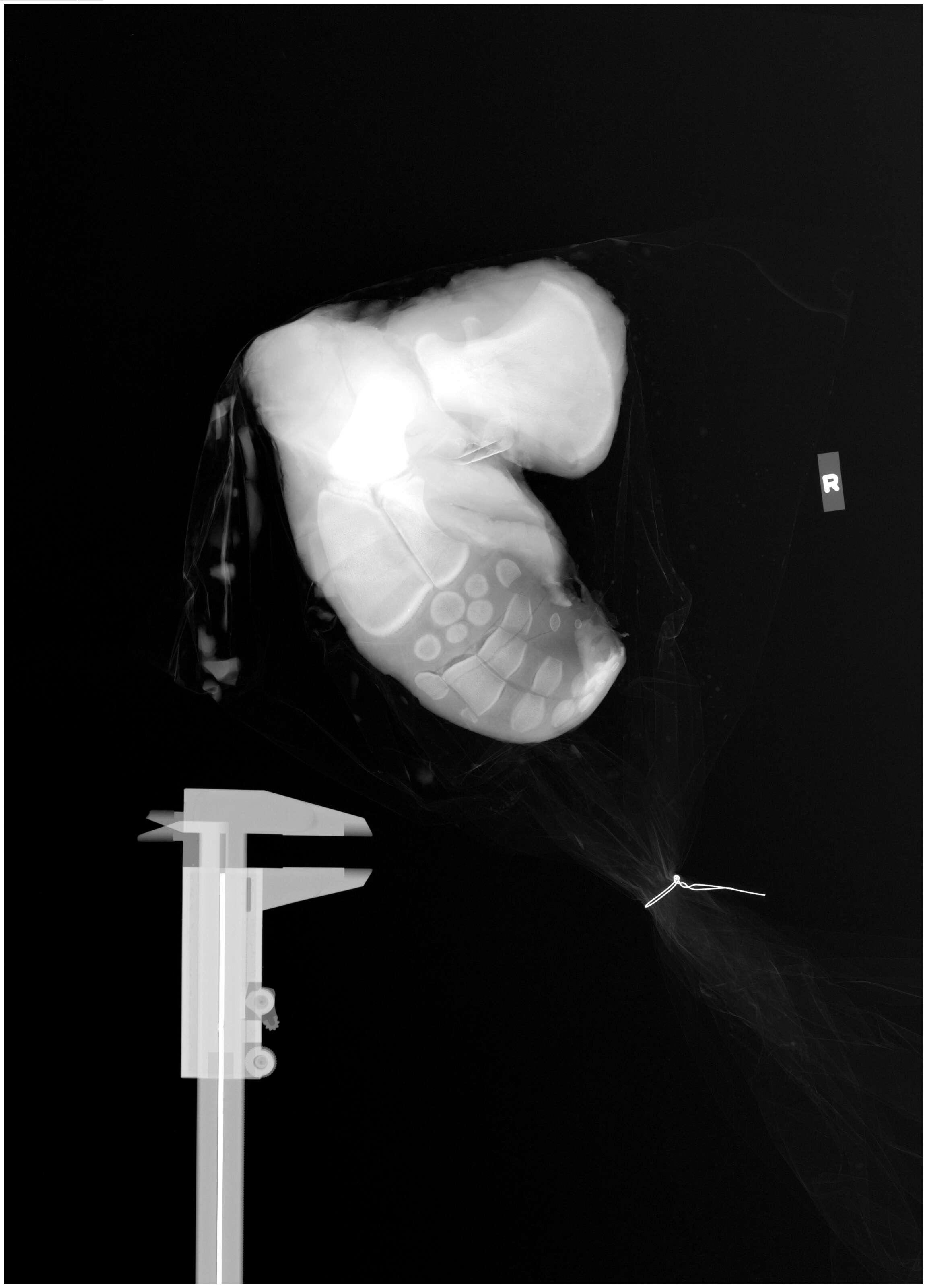 Image of deuterostomes