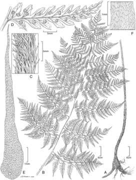 Image of Biota